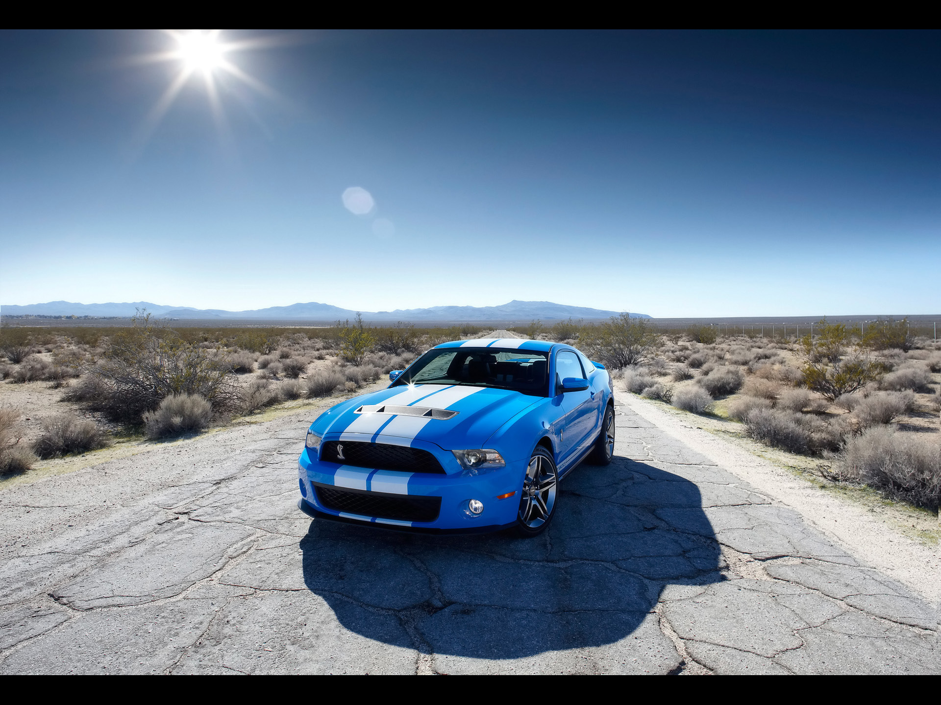Drive A Shelby Mustang In Las Vegas Shelby Driving